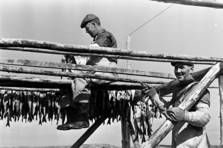 Dette bilde fra Smøla får stå som et eksempel på at nordmenn sto for det meste av produksjonsarbeidet i fiskeindustrien i tidligere tider. Foto: Per Helge Pedersen.